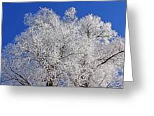 White Frost Tree  Greeting Card