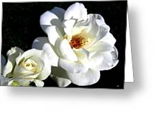 White Perfection Greeting Card