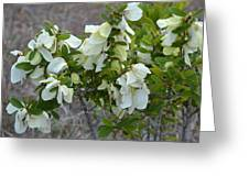 White Wild Flowers Greeting Card