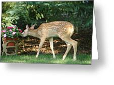 Whitetail Deer Greeting Card