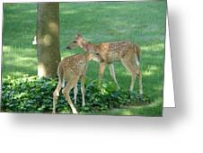 Whitetail Fawns Greeting Card