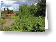 Wild Roses On Whitemud Creek Greeting Card