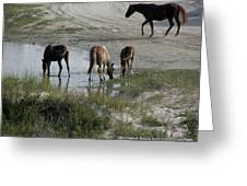 Wild Spanish Mustangs Greeting Card