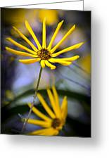 Wild Swamp Daisy Greeting Card