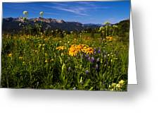 Wildflower Meadows And The Anthracite Range Greeting Card
