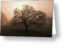 Winter Tree On A Frosty Morning, County Greeting Card