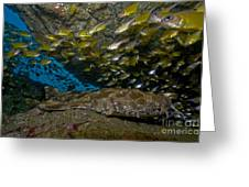 Wobbegong Shark And Cardinalfish, Byron Greeting Card