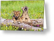 Wolf Cubs On Log Greeting Card
