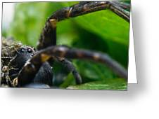 Wolf Spider And Babies 2 Greeting Card