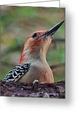 Woodpecker II Greeting Card