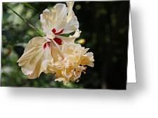Yellow Hibiscus Greeting Card