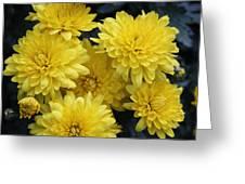 Yellow Mums Greeting Card