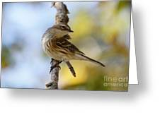 Yellow-rumped Warbler Greeting Card