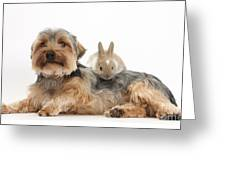 Yorkshire Terrier Dog And Baby Rabbit Greeting Card