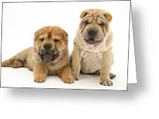 Young Dogs Greeting Card