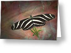 Zebra Longwing  Butterfly-2 Greeting Card