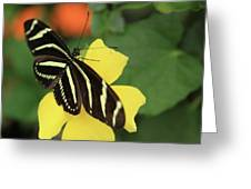 Zebra Longwing Greeting Card