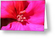 Zonal Geranium Named Tango Neon Purple Greeting Card
