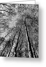 Epping Forest Trees Greeting Card