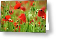 Field Of Poppies. Greeting Card by Bernard Jaubert