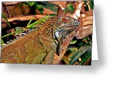 Iguana Lizard Greeting Card