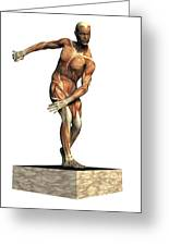 Male Musculature Greeting Card