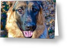 10-month-old Shepherd 2 Greeting Card