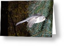 Tufted Titmouse In Flight Greeting Card