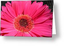 1002 Greeting Card