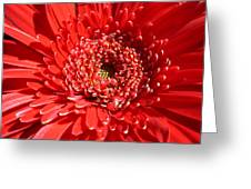 1021 Greeting Card