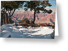 10398 Twisted Junipers Greeting Card