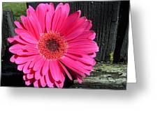 1049c Greeting Card