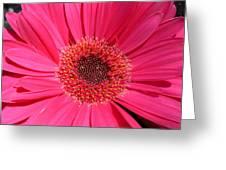 1051 Greeting Card