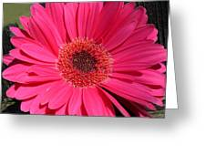 1052c Greeting Card