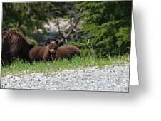 Black Bear Family Greeting Card
