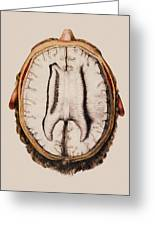 Brain Anatomy Greeting Card