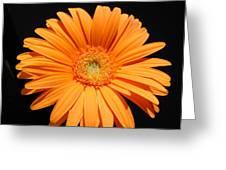 1105-2 Greeting Card