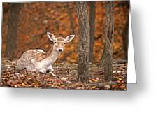 1111-7638 Fawn In Fall Greeting Card