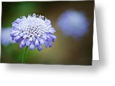 1205-8794 Butterfly Blue Pincushion Flower Greeting Card