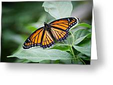 1205-8934 Monarch In Spring Greeting Card by Randy Forrester