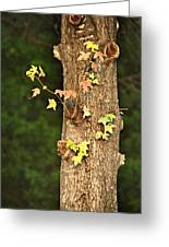 1209-0859 September Tease Greeting Card by Randy Forrester