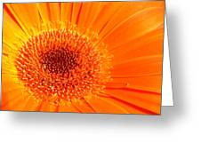 1229-003 Greeting Card
