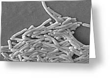 Legionella Pneumophila Greeting Card
