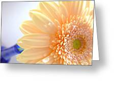 14191c3 Greeting Card