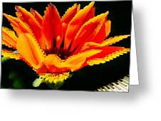 Gazania Krebsiana Flower Greeting Card