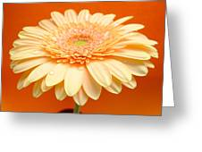1521-003 Greeting Card