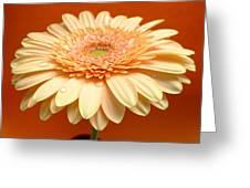 1521c-001 Greeting Card