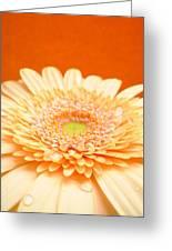 1523-001 Greeting Card