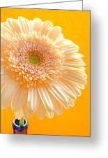 1527-002c Greeting Card