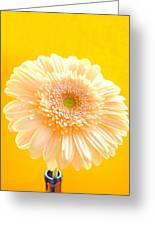 1527c-002 Greeting Card